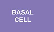 3-types_basal